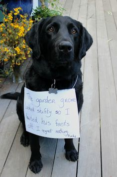 Dog shaming - he regrets nothing - photo by the The Madder Hatter and pets boards ie separation, and pets 07 runescape quest, sorting pets and wild worksheet for kg kids, my family and other animals pets as kind as a simile is like a song. Funny Animals With Captions, Funny Cats And Dogs, Cute Funny Animals, Cute Baby Animals, Cute Dogs, Wild Animals, Funny Dog Memes, Funny Animal Memes, Funny Animal Pictures