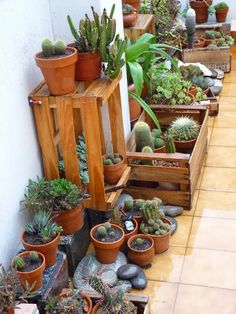100 Beautiful DIY Pots And Container Gardening Ideas - Page 17 of 101 - Best Home Decor Ideas Cacti And Succulents, Planting Succulents, Indoor Garden, Indoor Plants, Pot Jardin, Parasols, Grow Tent, Love Garden, Plant Shelves