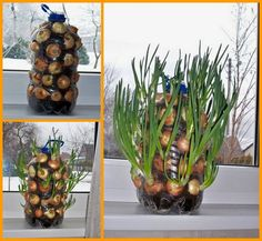 Have onions year round with this #DIY Vertical Onion Planter!
