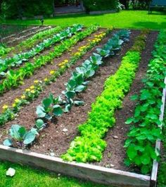 If you want to know exactly how to grow a vegetable garden here is all the information you will ever need.