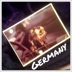 2015-10-21 #Postcard from #Germany (DE-4628664) via #Postcrossing #dog (Google Translate says that the card is from a book but doesn't say which book.)