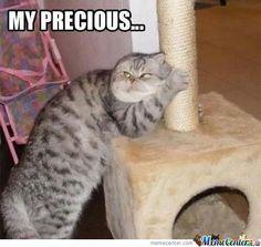 Gollum Cat