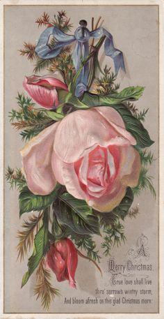 Christmas Large Pink Rose