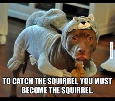 Funny pitbull meme - Funny Pictures, Funny jokes and so much Cute Funny Animals, Funny Animal Pictures, Funny Cute, Funny Dogs, That's Hilarious, Squirrel Pictures, Hilarious Sayings, Funniest Animals, Fail Pictures