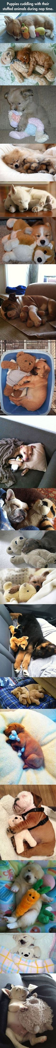 Puppies cuddling with their stuffed animals during nap time.