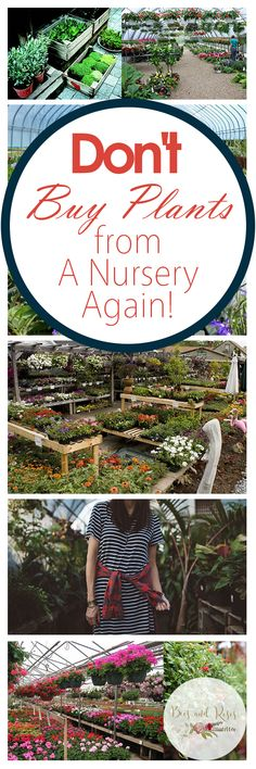 Don't Buy Plants from A Nursery Again! - Bees and Roses