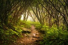 Craggy Gardens Appalachian Hiking Trail Fog Blue Ridge Parkway near Asheville NC in Western North Carolina