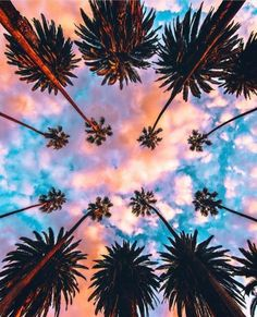 Colorful sky with upward palm trees.