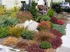 reference image for combination of dwarf conifers with low water drought tolerate shrubs