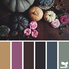 SnapWidget   today's inspiration image for { autumn hues } is by @kellyish ... thank you, Kelly, for your gorgeous #SeedsColor share!