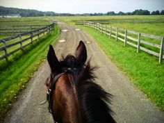 on horseback is my favorite way to view the world! Pretty Horses, Horse Love, Beautiful Horses, Horse Ears, Future Farms, Jolie Photo, Horse Pictures, Horse Photography, Horseback Riding