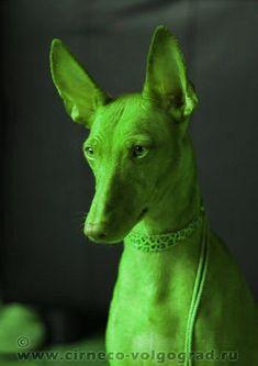 Dog Accessories Harness .Dog Accessories Harness