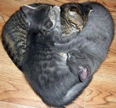 3 cats, 1 heart.  =^..^= www.kittyprettygifts.com #cats #cute #lolcats #memes #funny #humor #kitty #kittyprettygifts #love #heart Cute Funny Animals, Cute Baby Animals, Cute Baby Cats, Animals And Pets, Funny Cats, Lucky Number, Number 3, Cool Cats, I Love Cats