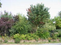 Créer une haie, associer arbres et arbustes.