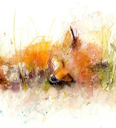Fox print, LIMITED edition PRINT of 'sleeping FOX' original animal art illustration with certificate hand signed, illustration, animal art Watercolor Animals, Watercolor Print, Watercolor Illustration, Watercolor Paintings, Fox Watercolour, Watercolor Ideas, Sleeping Fox, Animal Art Prints, Fox Print