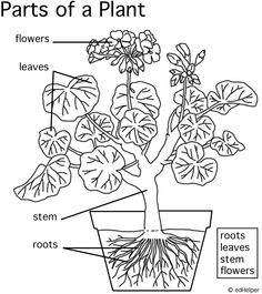 Parts of a plant printable.