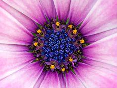 flower close-ups - Google Search