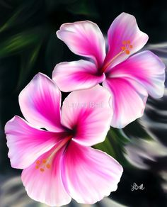 Bright Pink Hibiscus Flowers by Laura Bell