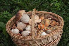 Jornadas Micológicas de Cantabria 2016 XXX Jornadas Micológicas de Cantabria que se celebran en Camargo del 21 al 26 de octubre, cumplen su XXX edición.