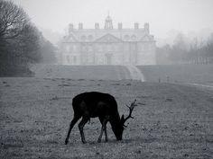 B/W Deer + Castle