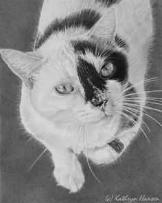 commission portrait of your beloved pet by kathrynhansenart These custom works celebrate your companion's character and make wonderful keepsakes, heirlooms or gifts. Each graphite portrait is drawn on Stratmore Bristol board, which is a heavy duty archival board. When done, it is protected by an invisible coating to ensure no smudging.  Drawing size: 8x10 with plain background.