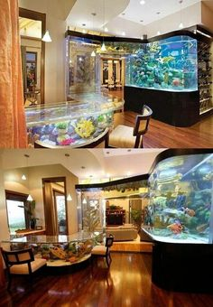 Saltwater tank kitchen... yes please