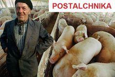 Postalchnika