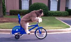 24 Bike GIFs that Are a Tour De Laffs from GifGuide