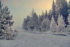Декабрьское морозное утро...