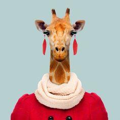 Northern Giraffe - Giraffa Camelopardalis