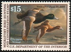 Federal Duck Stamp RW66 1999-00 Greater Scaup - TR Duck Stamps, Etc.
