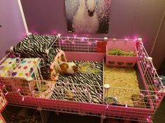 Guinea Pig Hutch, Guinea Pig House, Baby Guinea Pigs, Guinea Pig Care, Bunny Cages, Hamster Cages, Indoor Guinea Pig Cage, Pig Habitat, C&c Cage