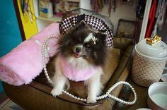 - Sou a princesinha do @srpetboutique e vim desejar um ótimo dia a todos  Aprovaram o look???? Com direito a coroa e tudo ✨ #Layla