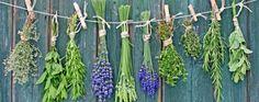 130 plantas medicinales y sus usos para la salud | La Bioguía