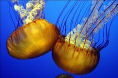 jellyfish33.jpg (640×427)