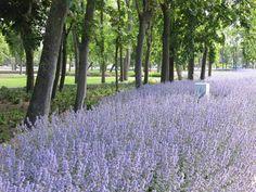 Leopoldpark   Nieuwpoort Belgium    Alain Cappelle