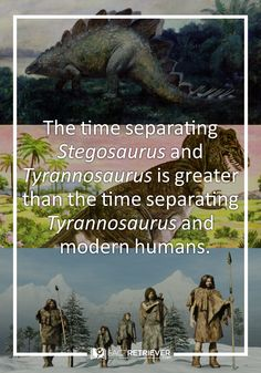 Explore the world's most exciting prehistoric creatures with our fun dinosaur facts, ranging from the carnivorous T-rex to the stubby-legged ankylosaur. Best Friend Outfits, Best Friends, Weird Facts, Fun Facts, Dinosaur Facts, Walking With Dinosaurs, Inspirational Quotes For Kids, Great Memes, Prehistoric Creatures