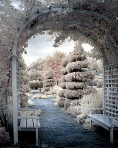 Winter beauty—sculpted trees & arbor dusted with snow❣ Winter Szenen, I Love Winter, Winter Magic, Winter Time, Winter Christmas, Merry Christmas, Christmas Decor, Beautiful World, Beautiful Places