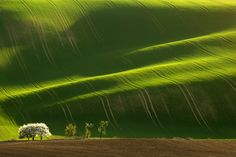 Awesome beauty of the green fields of Moravia, picturesque region of the Czech Republic.