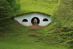 When Peter Jackson's production crew left Matamata, New Zealand, they left 17 hobbit holes on the private farm that was used as a stand-in for the Shire. Since then, the farm's sheep have moved in on this hobbit ghost town. Sheep Shelter, Animal Shelter, Goat Shelter, Hobbit Hole, The Hobbit, Hobbit Feet, Sheep House, Earth Sheltered Homes, Underground Homes