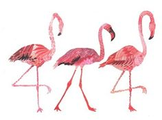 Just feeding my flamingo obsession. Must have this! #flamingolover #obsessed