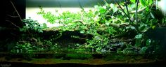 Paludarium Planted Aquarium, Aquarium Fish, Dendrobium Nobile, Orchid Fertilizer, Philodendron Scandens, Frog House, Ficus Pumila, Inside Garden, Reptile Enclosure