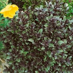 10 herbs to try in your garden
