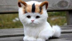 Adorable cat:lion
