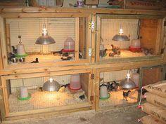 ... , Farm Life, Chicken Brooder, Brooder Box, Baby Chicks, Chick Brooder