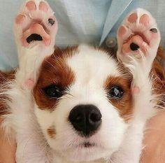 Aww so cute!!!