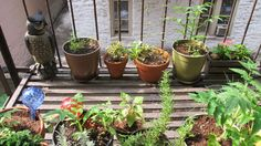 Urban gardening 101: How to plant in the space you have. If you want to test out your green thumb, but have very little outside space, fear not: You can still create a green oasis. We talked with Jeff Gilbert, a gardener and marketer for Green City Growers, to learn how to grow a garden in a small space, even if you only have room for one container. …