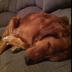 Puppies look so precious when they sleep.