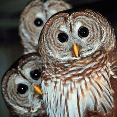 10 Facts You Probably Didn't Know About Owls (video)