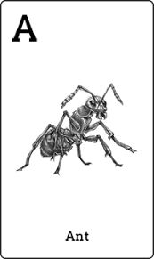 Animal Augmented Reality Apps & Flashcards for Kids All Animals Photos, Augmented Reality Technology, Flashcards For Kids, Animal Cards, Reading Comprehension, Fun Learning, Ants, Phonics, Coloring Books
